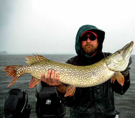 The Challenge of Musky Fishing - Musky Catch 4 - MuskyChasers.com